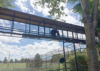 Chimps Inc's aerial tunnel system