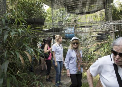 Touring Jungle Friends Primate Sanctuary