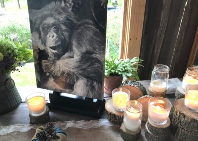 Decorations in our meeting space commemorated the lives saved at Fauna Foundation.